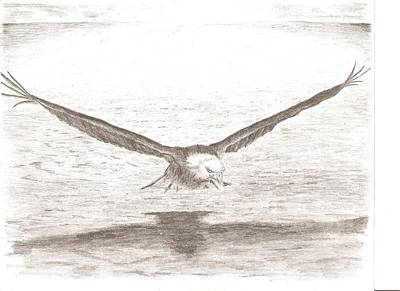 Eagle In Flight Drawing - Bald Eagle by Christopher Kyriss