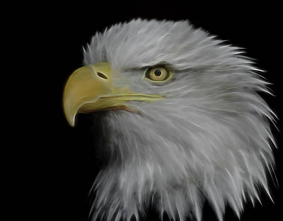 Digital Art - Bald Eagle Digital Art by Ernie Echols