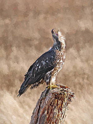 Photograph - Bald Eagle Digital Oil Painting by Sharon Talson