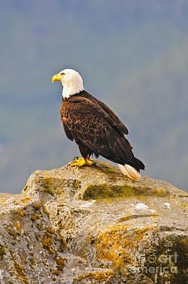 Photograph - Bald Eagle by Edward Kovalsky