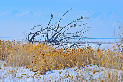 Bald Eagles Photograph - Bald Eagle Gathering by Greg Norrell