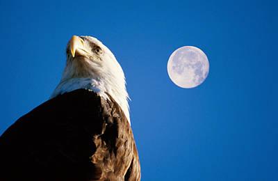 Eagle Photograph - Bald Eagle Haliaeetus Leucocephalus And by Mark Newman