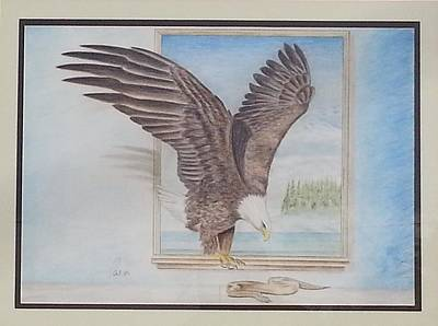 Eagle In Flight Drawing - Bald Eagle Having Lunch by Parmjit Gill