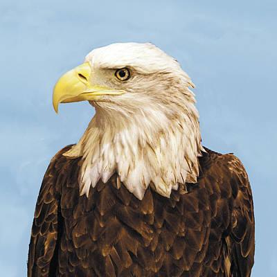 Photograph - Bald Eagle Headshot Profile by William Bitman