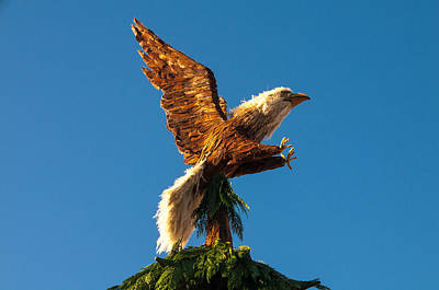 Photograph - Bald Eagle Horizontal by Connie Cooper-Edwards