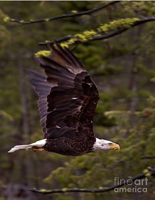 Lady Bug - Bald Eagle In Flight   #6867 by J L Woody Wooden