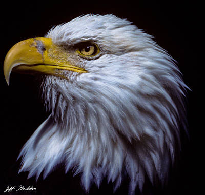Art Print featuring the photograph Bald Eagle by Jeff Goulden
