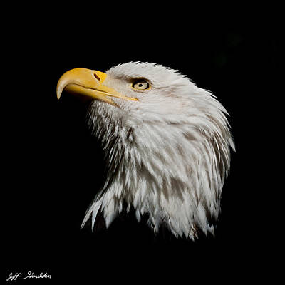 Bald Eagle Looking Skyward Art Print