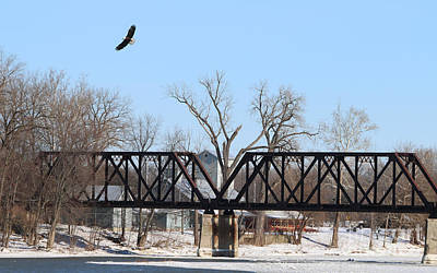 The Rolling Stones Royalty Free Images - Bald Eagle near Ludwig Mill Royalty-Free Image by Jack Schultz