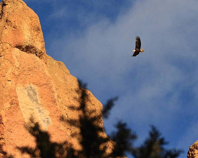 Photograph - Bald Eagle Over Smith Rock by Coby Cooper