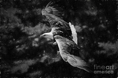 Photograph - Bald Eagle - Painterly Bw by Les Palenik