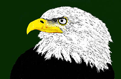Bald Eagle  Original by Paul Sutcliffe