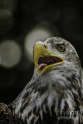 Photograph - Bald Eagle by Phil Cardamone