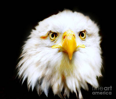 American Eagle Photograph - Bald Eagle by Jacky Gerritsen