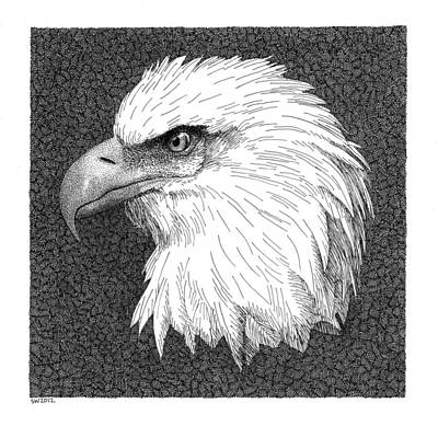 Drawing - Bald Eagle by Scott Woyak