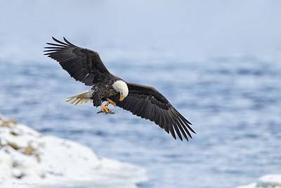 Photograph - Bald Eagle With Prey by Daniel Behm