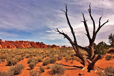 Photograph - Bald Tree At Arches  by Benjamin Yeager