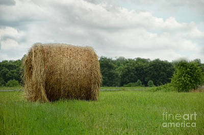Photograph - Bales by Tamera James