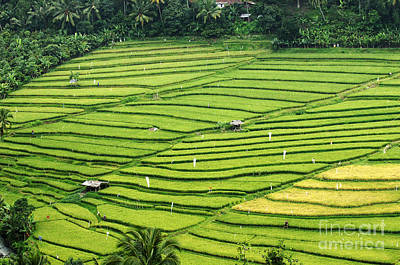 Photograph - Bali Indonesia Rice Fields by Bob Christopher