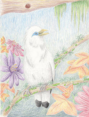 Starlings Drawing - Bali Myna by Jeanette K