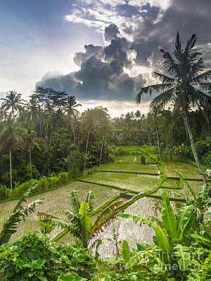 Bali Rice Terraces Art Print by Didier Marti