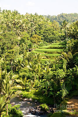 Photograph - Bali Sayan Rice Terraces by Rick Piper Photography