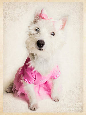 Westie Terrier Photograph - Ballerina Dog by Edward Fielding