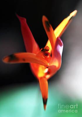 Ballerina Art Print by John Rizzuto