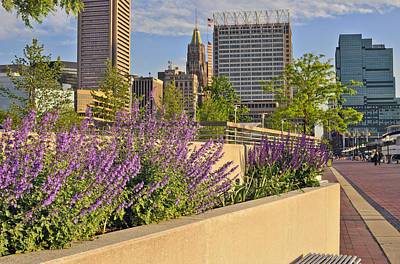 Art Print featuring the photograph Baltimore Inner Harbor With Flowers by Marianne Campolongo