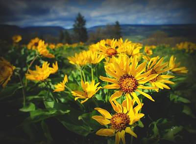 Photograph - Balsamroot Of The Gorge by TK Goforth