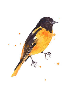 Oriole Painting - Baltimore Oriole Beauty by Alison Fennell