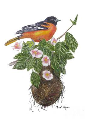 Oriole Drawing - Baltimore Oriole by Carol Veiga