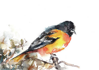 Oriole Painting - Baltimore Oriole II by Sophia Rodionov