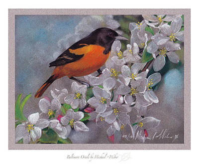 Oriole Drawing - Baltimore Oriole by Michael  Weber