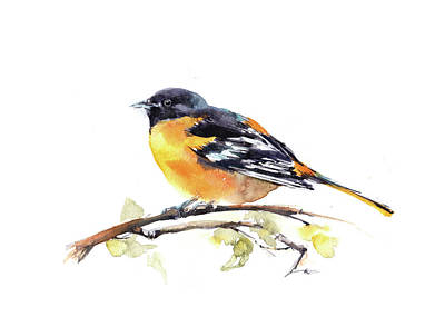 Oriole Painting - Baltimore Oriole by Sophia Rodionov