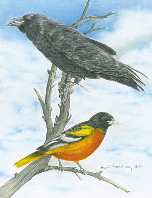 Oriole Drawing - Baltimore by Paul Treadway