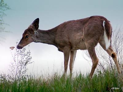Bambi 2 Original