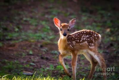Bambi Art Print by Deborah Scannell