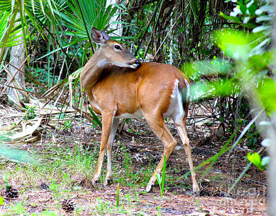 Reptiles Royalty-Free and Rights-Managed Images - Bambi in the Brush by Carey Chen