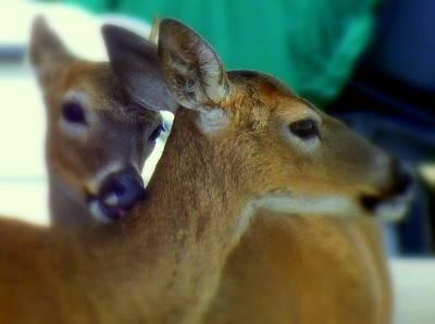 Coastal Forest Photograph - Bambi by Karen Wiles