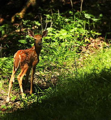 Photograph - Bambi by Melissa Petrey