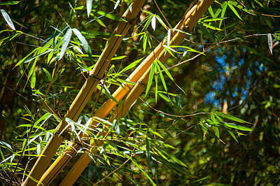 Photograph - Bamboo 2 by Harry Spitz