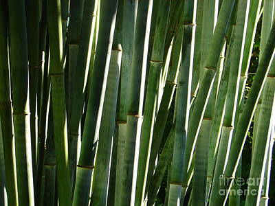 Photograph - Bamboo Abstract by Lew Davis