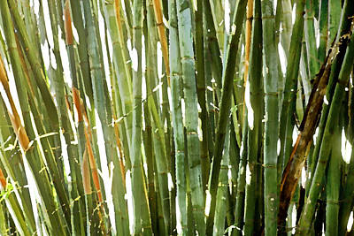 Photograph - Bamboo Abstract by Rich Franco