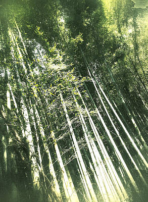 Photograph - Bamboo Abstract by Yen