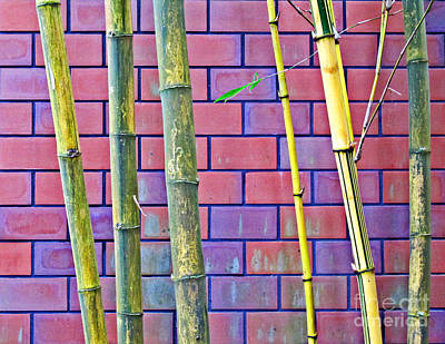 Art Print featuring the photograph Bamboo And Brick by Ethna Gillespie