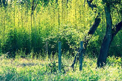 Bamboo Background Art Print