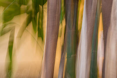 Photograph - Bamboo by Beverly Parks