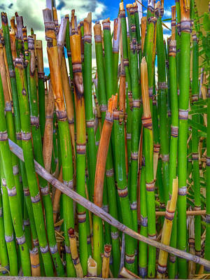 Photograph - Bamboo by Bill Owen