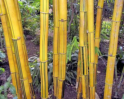 Photograph - Bamboo by Bob Slitzan